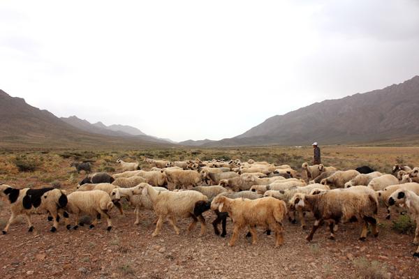 ギャッベ イラン 遊牧風景
