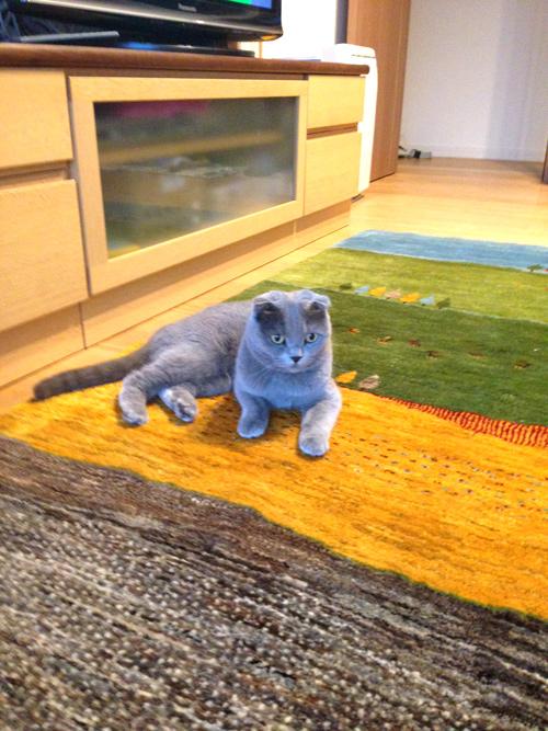 ゾランヴァリ ギャッベ と猫ちゃま