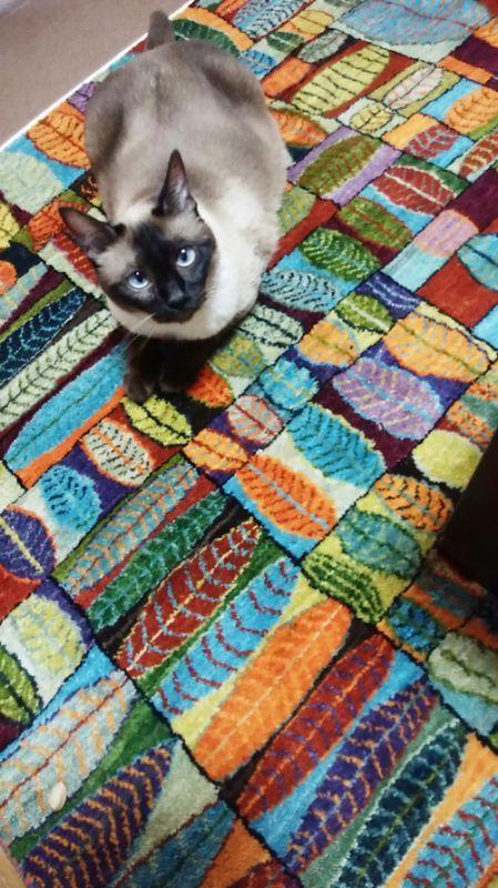 ギャッベ猫ちゃんと紫オレンジのリーフ